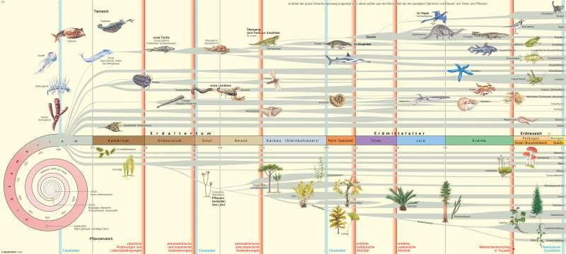   Entwicklung des Lebens (Modell)   Erde - Entwicklung der Kontinente und des Lebens   Karte 12/2
