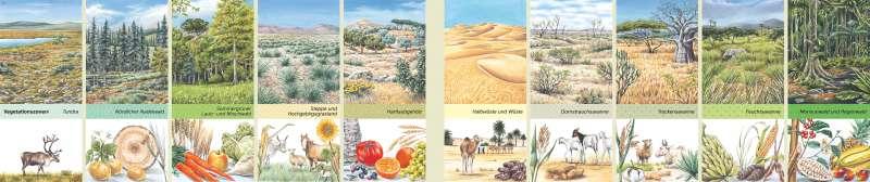 | Vegetationszonen | Erde - Landschaften | Karte 176/1