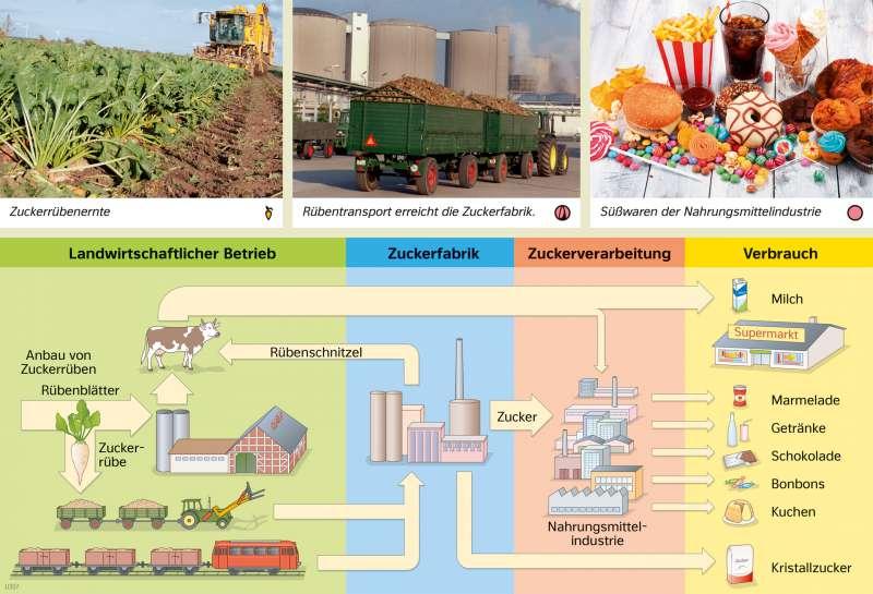 | Signaturen vernetzen – Vom Zuckerrüben-Anbau zur Süßwaren-Produktion | Europa - Landwirtschaft | Karte 77/2