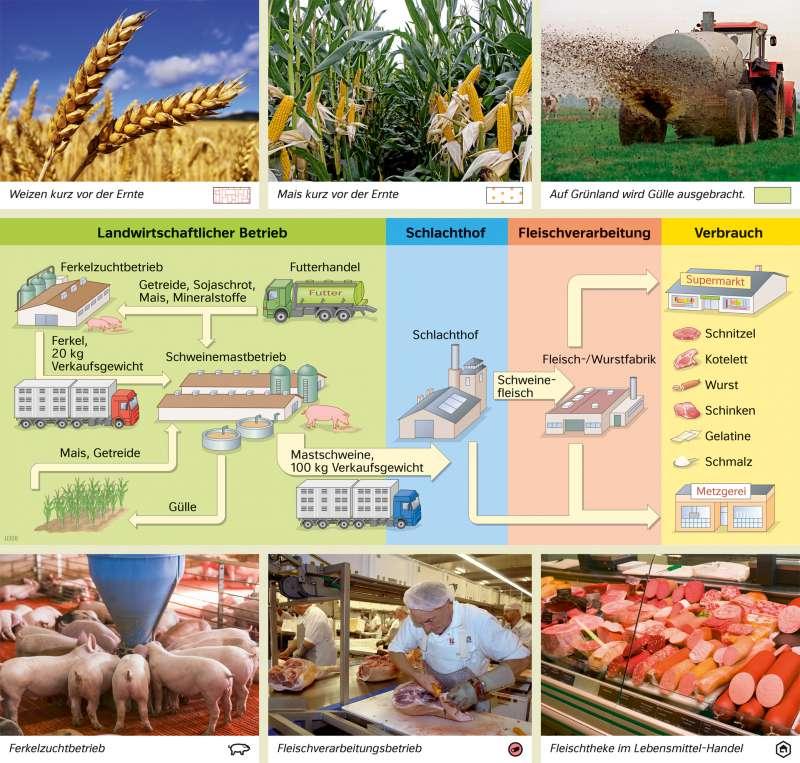 | Signaturen vernetzen – Von der Schweinezucht zur Fleischwarenproduktion | Europa - Landwirtschaft | Karte 77/3