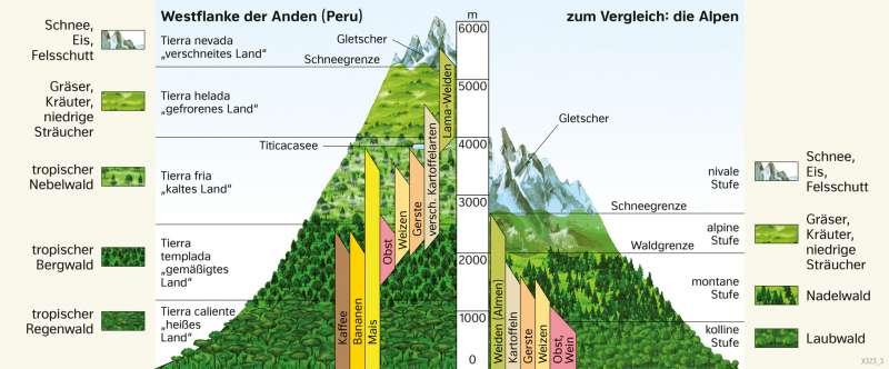 | HöhenstufenderVegetation | Südamerika - Landwirtschaft | Karte 161/3