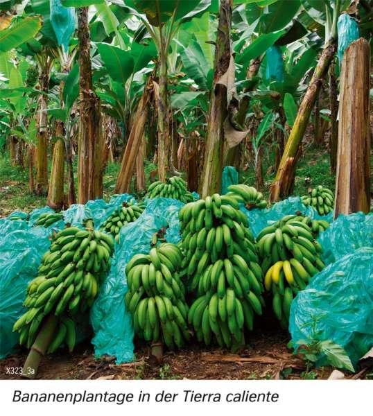 | Bananenplantage in der Tierra caliente | Südamerika - Landwirtschaft | Karte 161/3